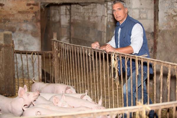 Правильно разделанная свинья
