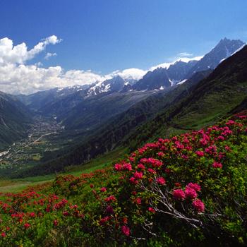 Белоснежные пики гор, окружающие долину, превращают ее в частные владения.