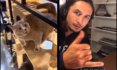 ремикс странные вопли кота вирусным youtube