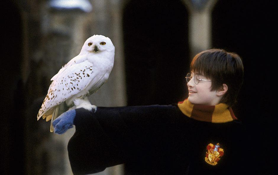 20 волшебных истин из «Гарри Поттера», которые помогают жить