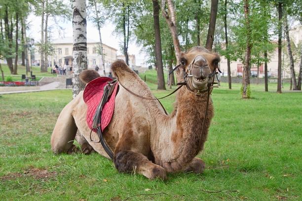 Экзотические животные в Перми