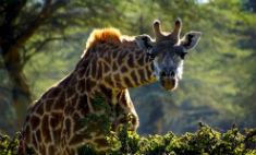 «Природа смотрит на тебя»: 20 потрясающих фото