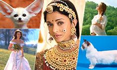 7 красочных событий в Уфе на выходные: зверята, дети, свадьбы и Индия