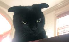 кот необычными ушами новая звезда интернета