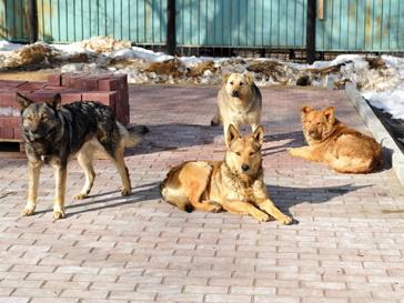 Благотворительная помощь бездомным животным