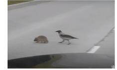 ворона помогает ежу перейти дорогу видео