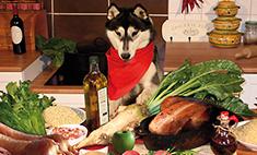 Французская кухня для собак и кошек