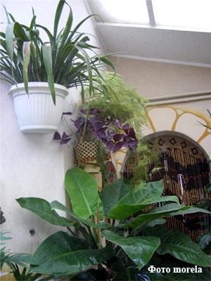 Покой растений