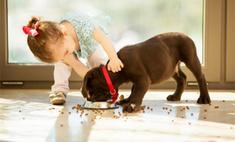 Купите ребенку собаку! Опыт одной мамы