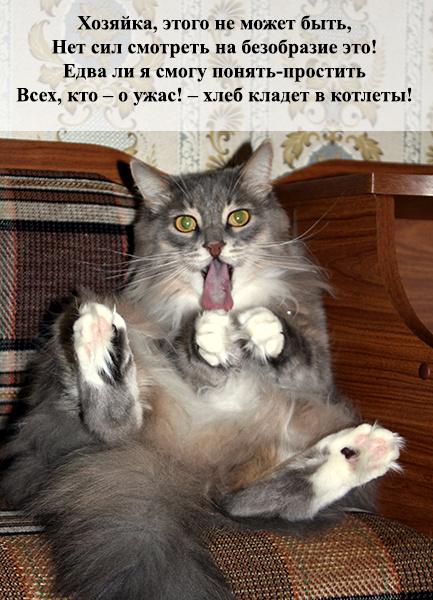 Ржачные картинки до слез с котами