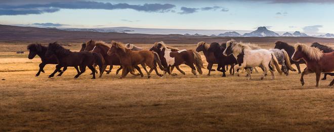 активность к чему сниться стадо коней Guahoo