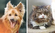 Котопёс недели: кот Никифор и пёс Лавр