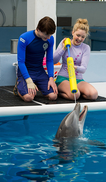 кино, «История дельфина – 2», кадр, дельфин