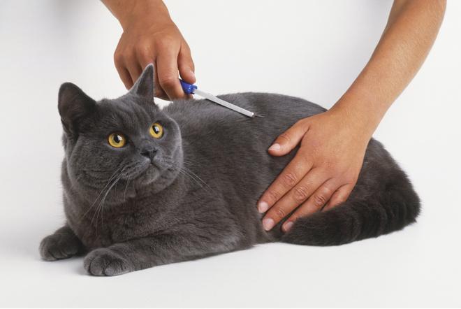 что такое фурминатор для кошек