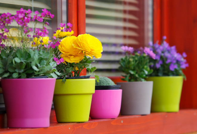 цветы которые цветут круглый год