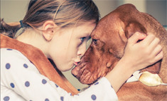 5 доказательств, что коты и собаки полезны для здоровья