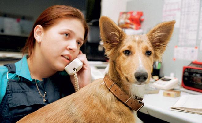 Анна Викторова, диспетчер поисково-спасательного отряда № 6, за работой. Спасенную несколько лет назад собаку коллеги Анны оставили в отряде