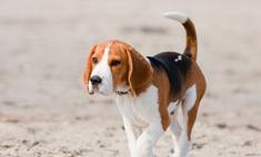 Защитники животных спасли от поедания сотни собак