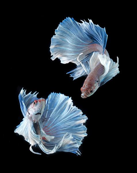 Гороскоп: Рыбы