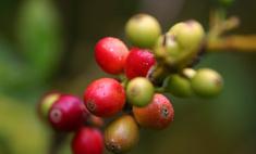 Чего вы не знали о кофе: секреты напитка