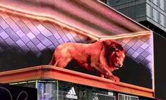 Видео на этом китайском 3D-экране настолько реалистичное, что заставляет людей разбегаться. Но мы смогли сделать подборку