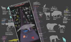 живут разные виды животных наглядные цифры картинке