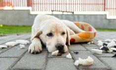 Брошенный пес месяц прождал хозяев, не отходя от вещей