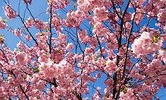 Запах весны: фестиваль цветов