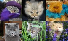 50 забавных котиков Ярославля. Голосуй за самого милого!