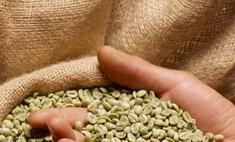 Зеленый кофе: как правильно заваривать