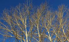 Вандалы уничтожили «обувное дерево» в Неваде