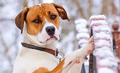 Жизнь собачья: как защитить питомца от догхантеров