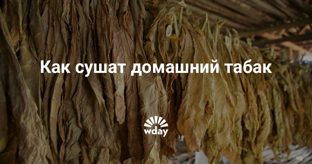 Как сушить листья табака в домашних условиях