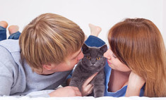 Ученые придумали способ лечения от аллергии на кошек