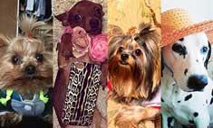 Выбери самую модную собачку Волгограда