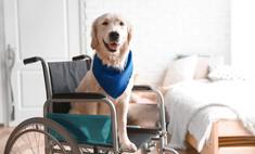 пёс завалил тесты звание собаки-поводыря помешало стать всеобщим