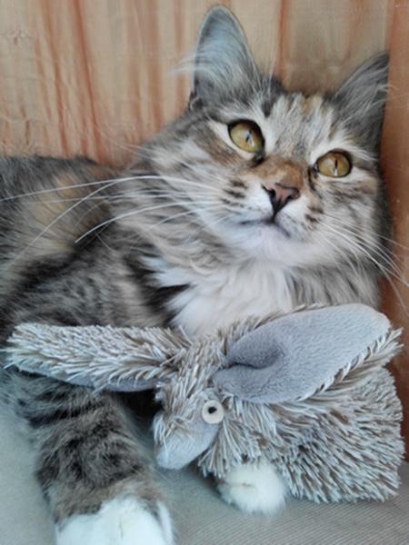 коты, кошки, конкурс, Самый забавный котик Самары по версии Woman's Day