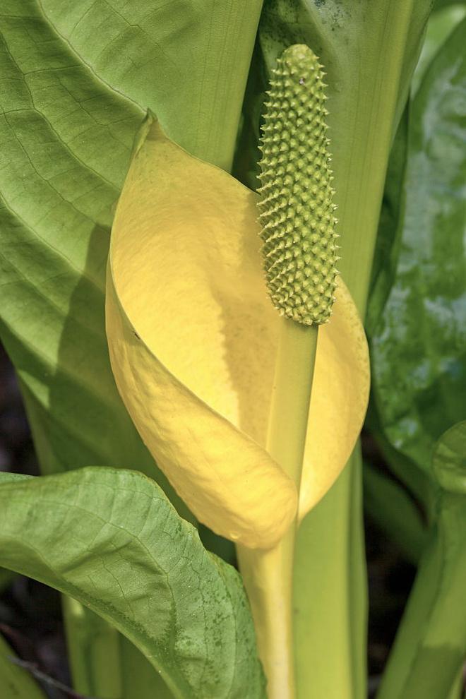 почему желтеют листья у домашних цветов