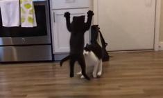 видео боевого прыжка котенка день собрало тысячу комментариев