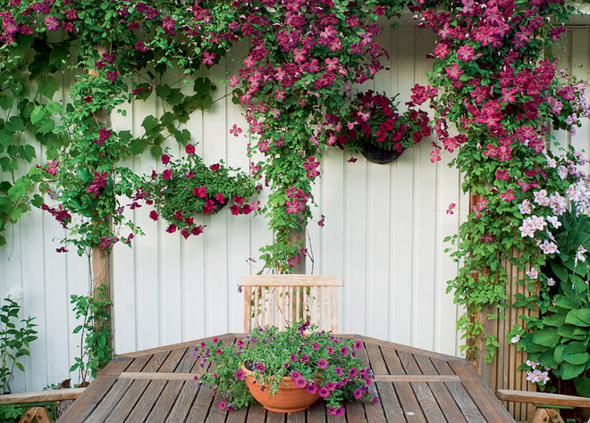 Терраса увита цветущим кизилом.