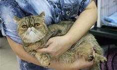 Брэд Питт и еще 24 очаровательных котика