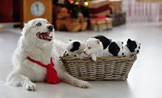 Самые стильные собаки Новосибирска: выбирай!