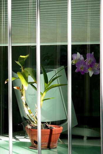 Орхидея станет украшением любого офиса, но помните, что это растение нуждается в обильном поливе и ежедневном опрыскивании.