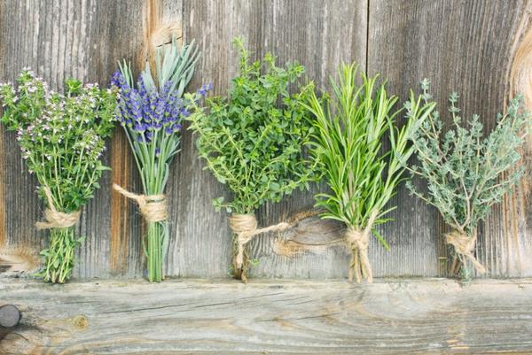 Пряно-ароматические травы