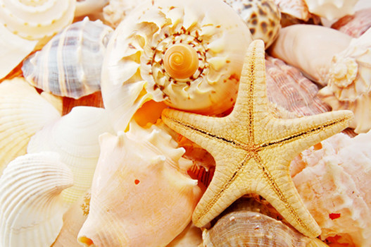 Из ракушек получится прекрасная композиция в стеклянной вазе, заполненной водой или песком.