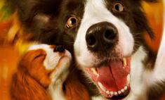 Собачий вальс: все звезды на премьере «Елки лохматые»