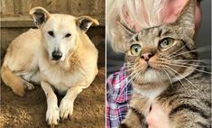 котопёс недели кот мур-мурыч собака баушна