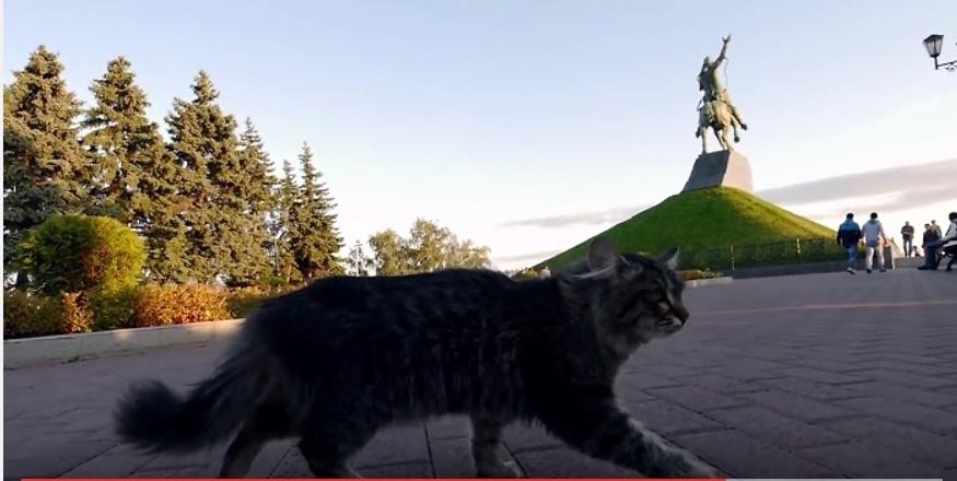 Бездомный кот из Уфы стал звездой Youtube