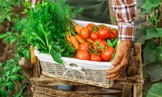 Инструкция: как сохранить урожай до весны