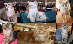Топ-15 самых обаятельных кошек и котов